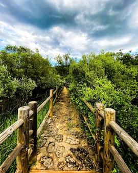 Piękny widok pionowy wąskiej ścieżki z drewnianą balustradą w parku narodowym triglav w słowenii