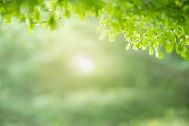 Piękny widok przyrody zielony liść na tle niewyraźne zieleni pod światło słoneczne