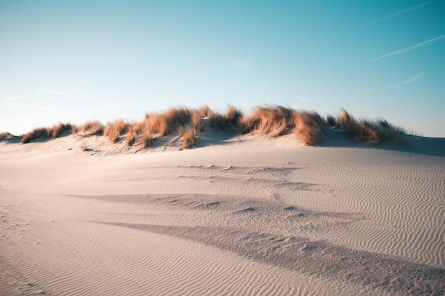 Piękny widok pustyni pod jasnym niebieskim niebem chwytającym w oostkapelle, holandie