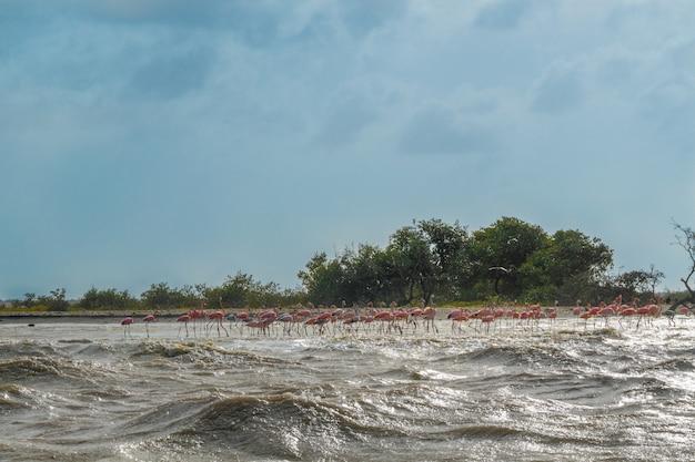 Piękny widok różowi flamingi na plażowym krajobrazie.