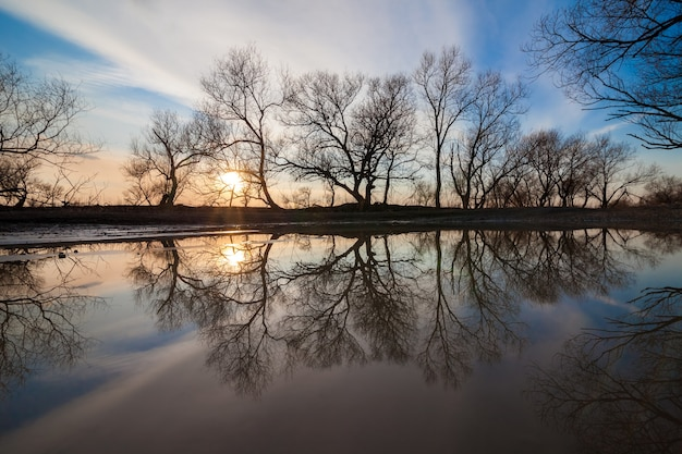 Piękny widok wiosennego zachodu słońca w lesie nad jeziorem