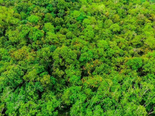 Piękny widok z lotu ptaka natury drzewa w lesie