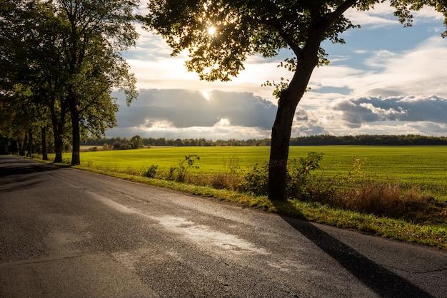 Piękny wieczór krajobraz - wiejska droga, zielone pole w słoneczny dzień.