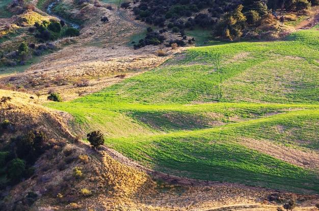Piękny wiejski krajobraz nowej zelandii - zielone wzgórza i drzewa