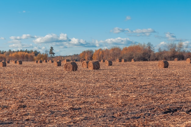 Piękny wiejski krajobraz. okrągłe bele słomy w zebranych polach i błękitne niebo z chmurami