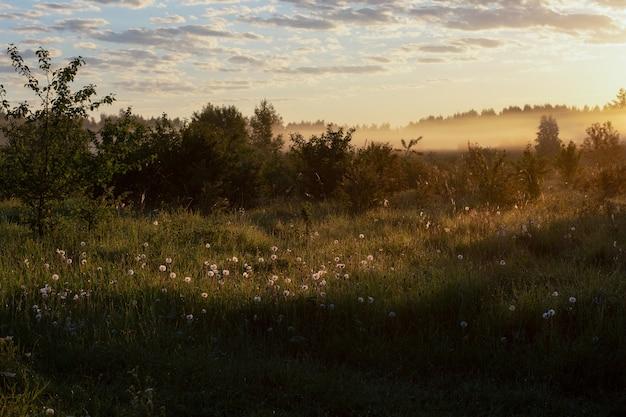 Piękny wiejski krajobraz panorama słonecznego i mglistego pola z mniszkami wczesnym rankiem w rosji