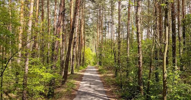 Piękny wiejski krajobraz z leśną drogą na spacery i jazdę na rowerze. ścieżka pasa chodnika z zielonymi drzewami w parku w słoneczny letni dzień.