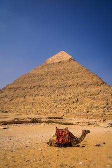 Piękny wielbłąd siedzący na piramidzie chefrena. piramidy w gizie to najstarszy pomnik grobowy na świecie. w mieście kair w egipcie