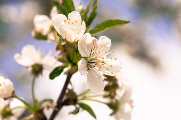 Piękny wiosenny bokeh do projektowania z copyspace