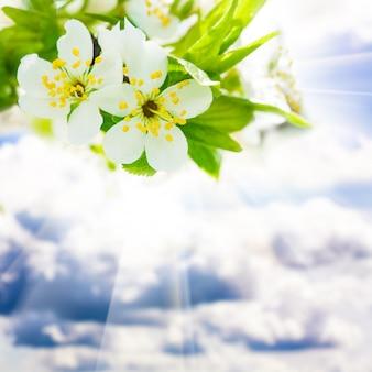 Piękny wiosenny bokeh nad błękitnym niebem, do projektowania