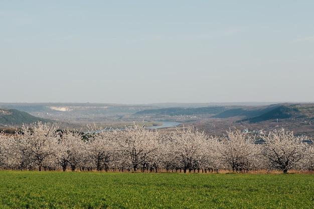 Piękny wiosenny krajobraz z zielonym polem i kwitnącym sadem z rzeką, wzgórzami i błękitnym niebem na ścianie. skopiuj miejsce.