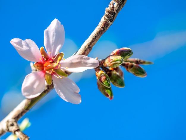 Piękny wiosenny kwiat