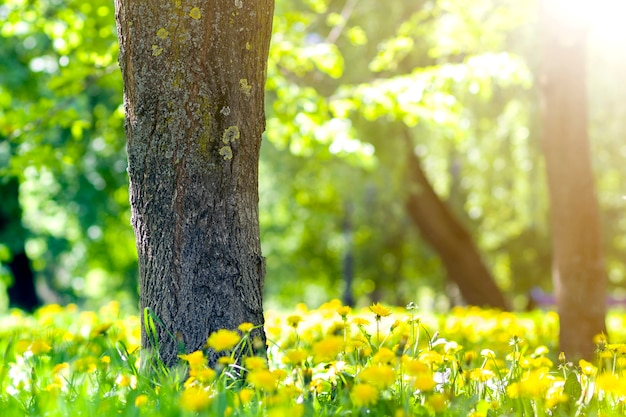 Piękny wiosenny lub letni dziki las lub park na jasny, słoneczny d