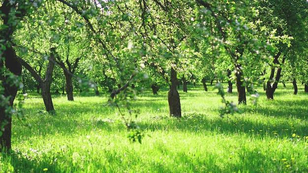 Piękny wiosenny park jasnozielone kolory w słońcu