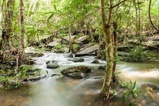 Piękny wodospad tajlandii w głębokim lesie.