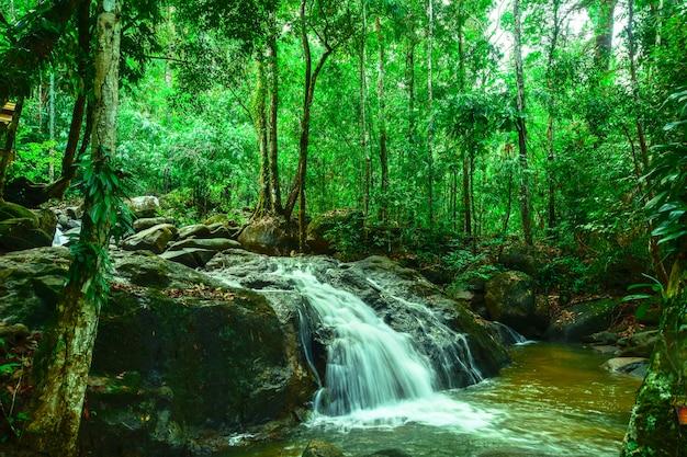Piękny wodospad w dużym lesie.