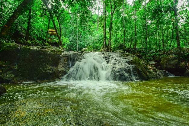 Piękny wodospad w dużym lesie