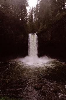 Piękny wodospad w gęstym lesie