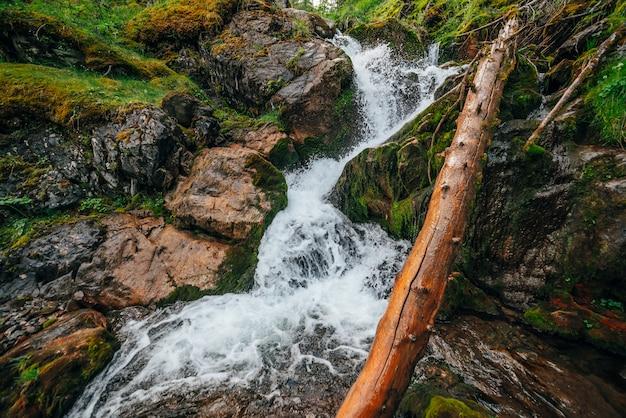 Piękny wodospad wśród bogatej roślinności