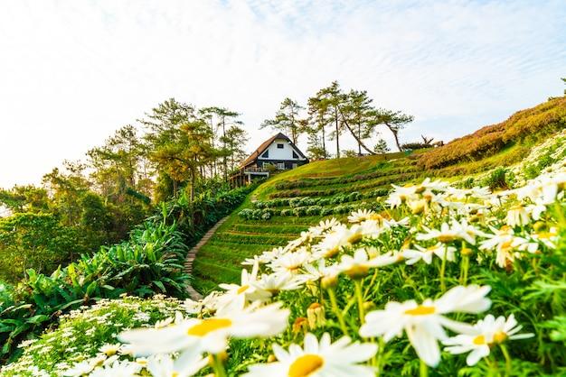 Piękny wschodu słońca niebo z ogródem na górze przy huai nam dang parkiem narodowym