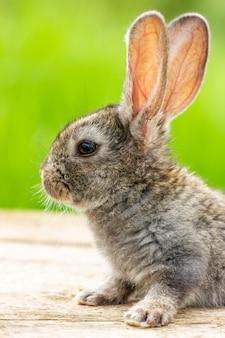 Piękny zabawny szary królik na naturalnej zieleni