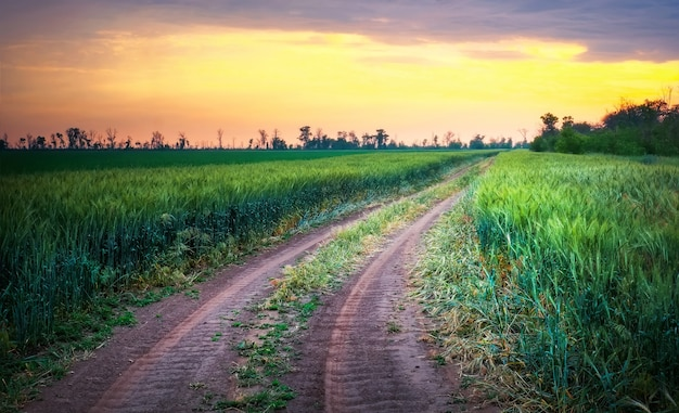 Piękny zachód słońca i droga na zielonych polach