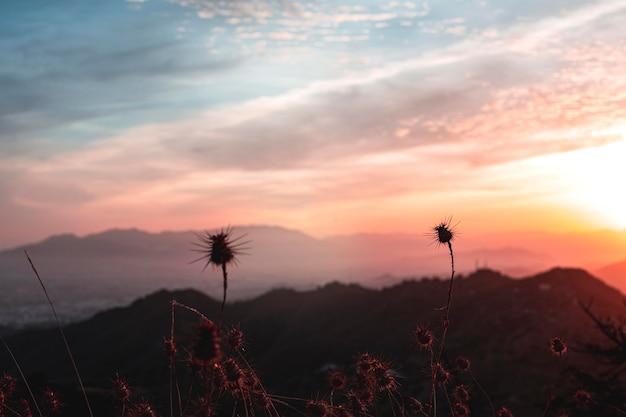 Piękny Zachód Słońca Krajobraz Z Drzewami Darmowe Zdjęcia