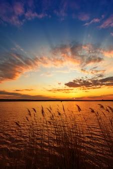 Piękny zachód słońca nad rzeką z trzciny na pierwszym planie. rama pionowa