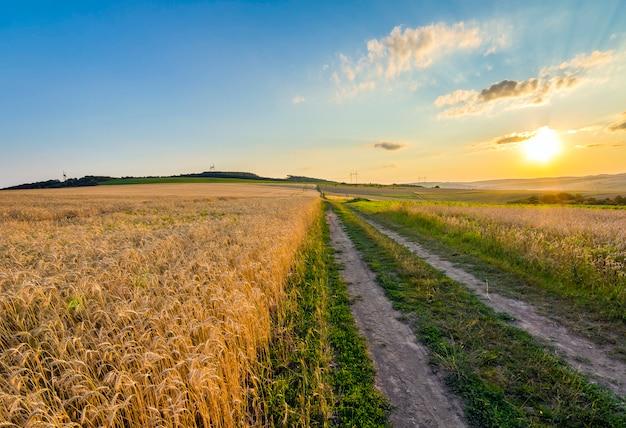 Piękny zachód słońca nad wsi polnej drodze żwirowej i dojrzałych pól pszenicy