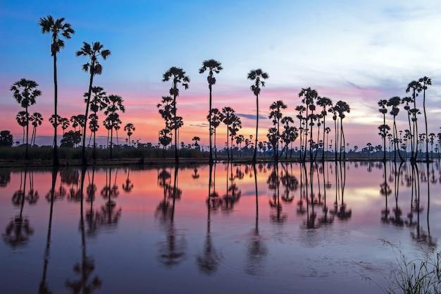 Piękny zachód słońca odbicie sylwetki palma, krajobraz tajlandia