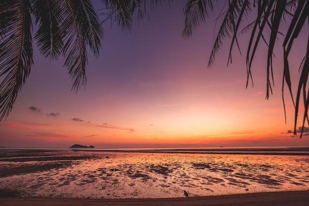 Piękny zachód słońca sylwetka palmy kokosowe