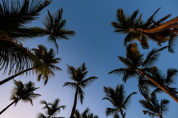 Piękny zachód słońca z ciemnymi sylwetkami palm i niesamowitym pochmurnym niebem na tropikalnej wyspie