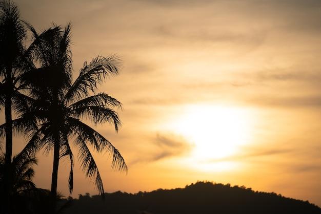 Piękny zachód słońca z ładnym niebem z palmą kokosową na pierwszym planie