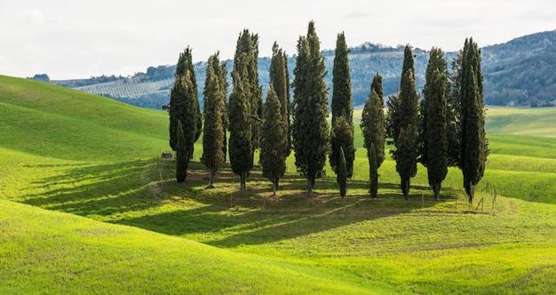 Piękny zakres wysokich drzew w zielonym polu w ciągu dnia