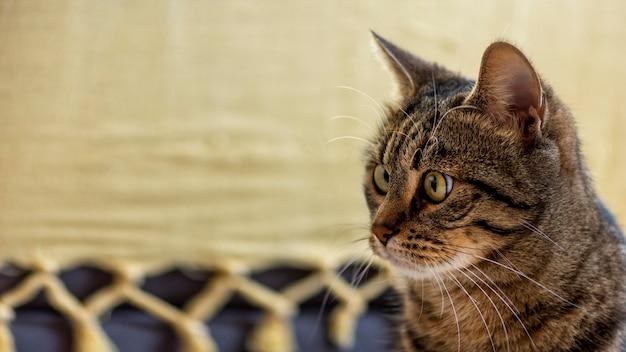 Piękny zaskoczony kot w pomieszczeniu