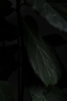 Piękny zbliżenie rośliny