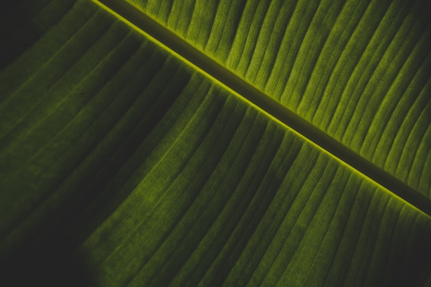 Piękny zbliżenie strzał zielony bananowy liść