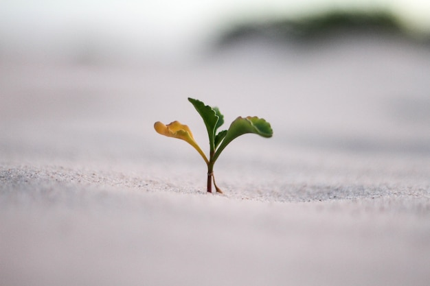 Piękny zbliżenie strzał żółta i zielona roślina w piasku