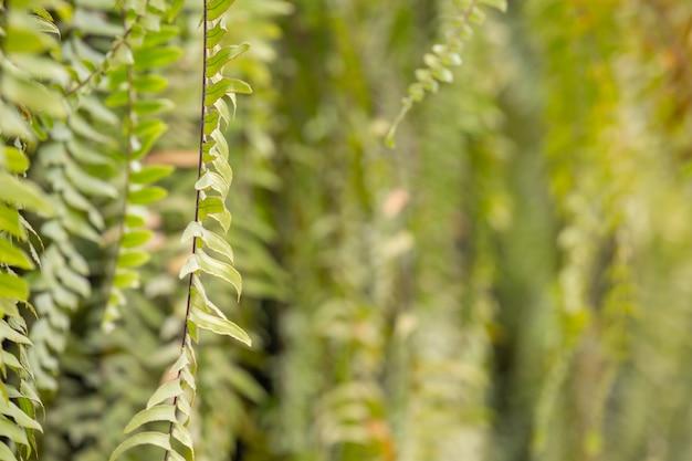 Piękny zielony bokeh liść