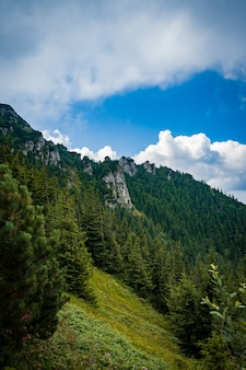 Piękny zielony górzysty krajobraz z dużą ilością drzew pod zachmurzonym niebem