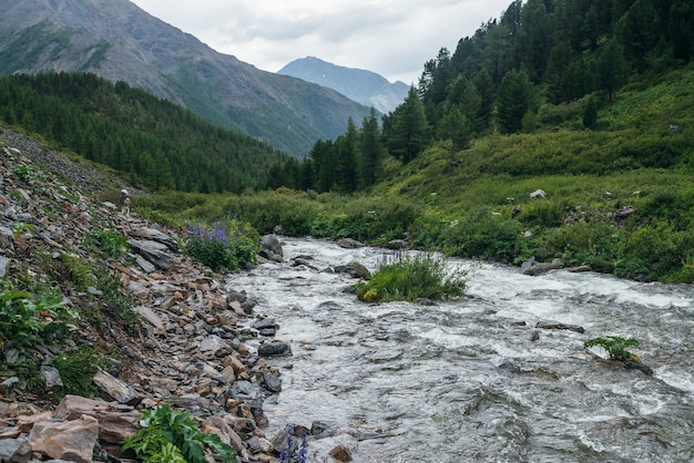 Piękny zielony krajobraz z dziką florą w pobliżu jasnej górskiej rzeki. wspaniała sceneria przyrody z przezroczystą wodą górskiego potoku i leśnych gór pod zachmurzonym niebem. malowniczy widok na góry.