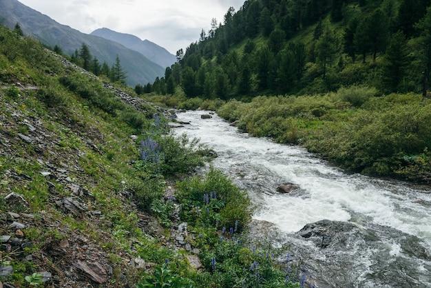 Piękny zielony krajobraz z fioletowymi kwiatami ostróżki i dzikiej flory w pobliżu jasnej górskiej rzeki. wspaniała sceneria przyrody z przejrzystą wodą górskiego potoku i leśnych gór. piękny widok.
