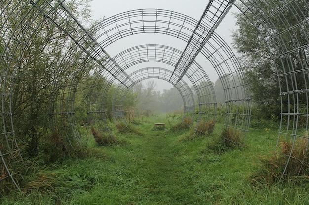 Piękny zielony krajobraz z metalowym łukiem w biesbosch noord brabant