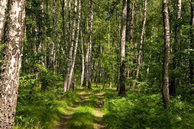 Piękny zielony las liściasty wiosną