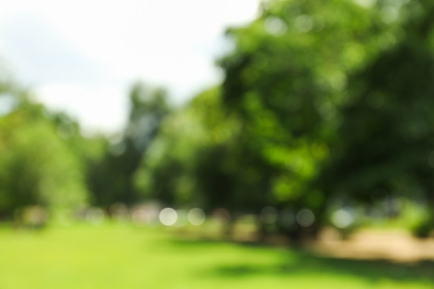 Piękny zielony letni park. tło zamazane pole, miejsce