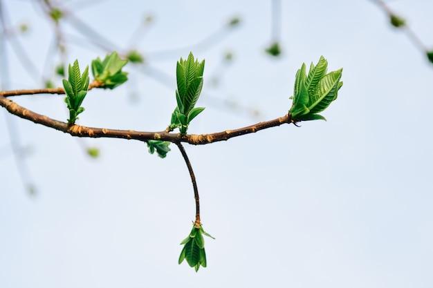 Piękny zielony liść drzewa rosnące w lesie na tle nieba.