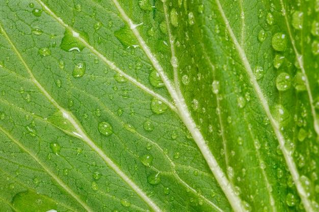 Piękny zielony liść z kropelek wody z bliska