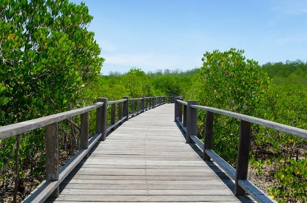 Piękny zielony namorzynowy las z boardwalk przy petchaburi, tajlandia