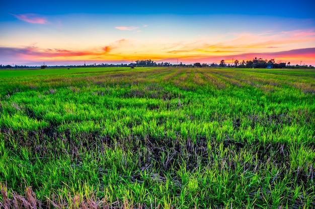 Piękny zielony niwa w zachodzie słońca