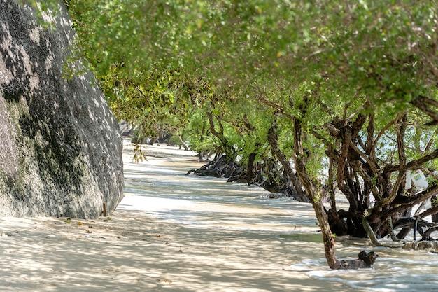 Piękny zielony tunel tropikalnych drzew namorzynowych na piaszczystej plaży w pobliżu skały na wyspie koh phangan, tajlandia